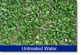 Yield results. Untreated water